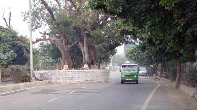 Dwarka Haunted Tree (Dwarka Sector 9 Metro Station)