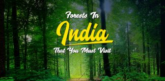 Forests In India: List Of 10 Most Popular Forests In India