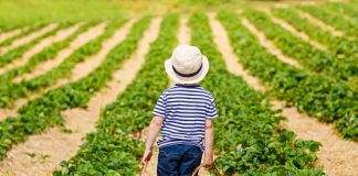 child with fruit baskets in hands in field
