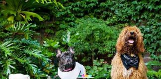 Puppalicious Cafes in Delhi Where Your Pets Can Accompany you